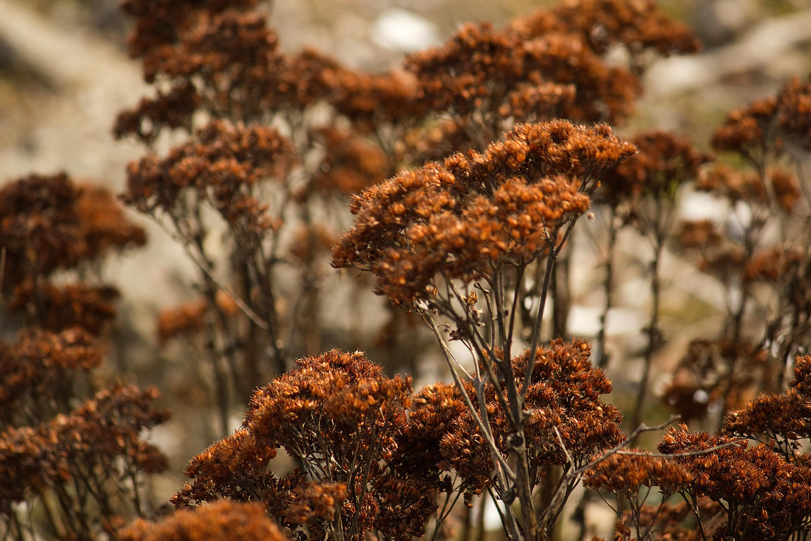 Forest of Dried Flowers by toshema