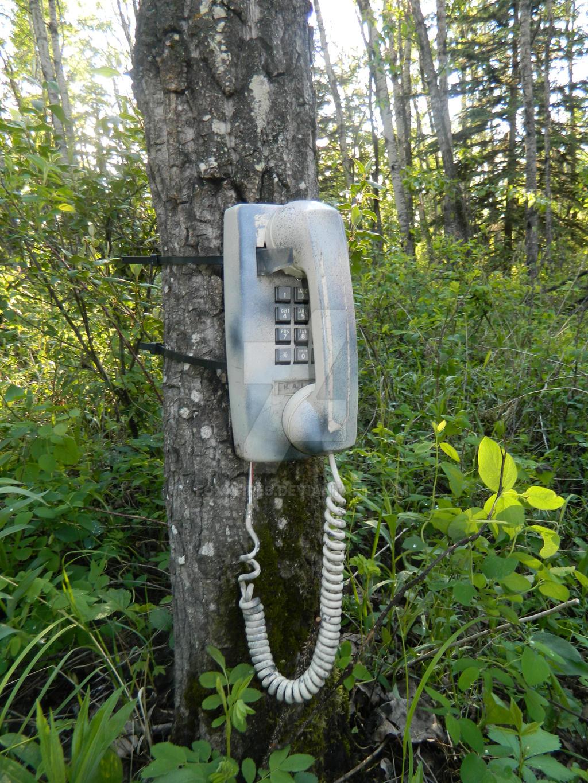 Telephone Caf  Rue Du Docteur Finlay