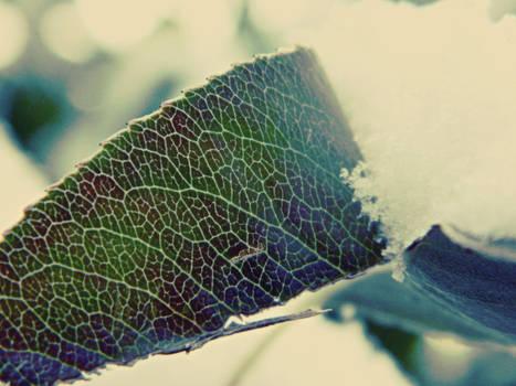 funky leaf pattern