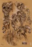 Demon anatomy