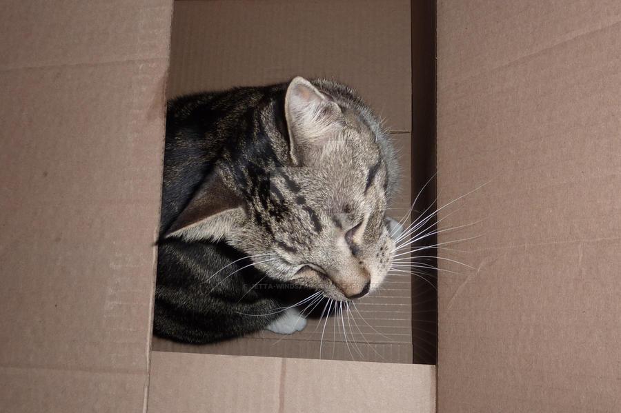 Cat In The Box by Jetta-Windstar
