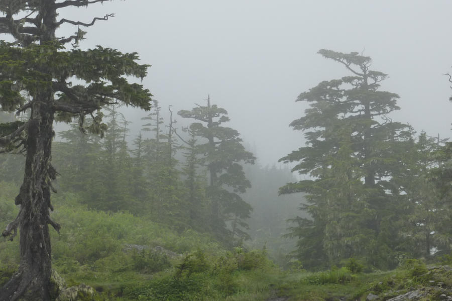 Misty Temperate Forest by Jetta-Windstar