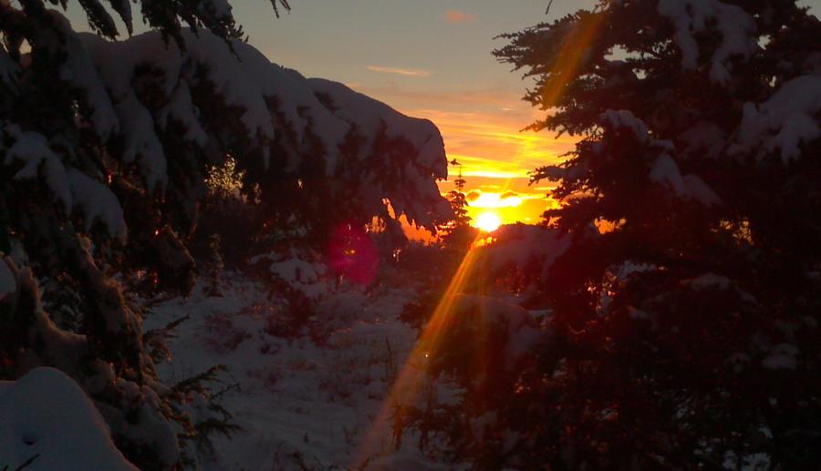 Evening Glare by Jetta-Windstar