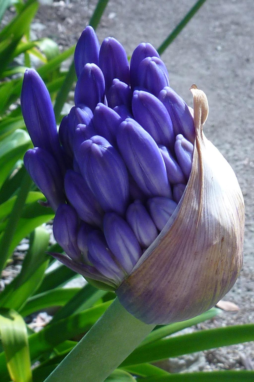 Blue flowers by Jetta-Windstar