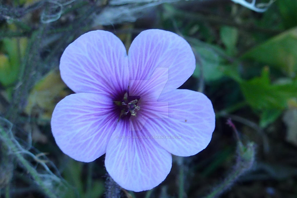 Flower #4 by Jetta-Windstar