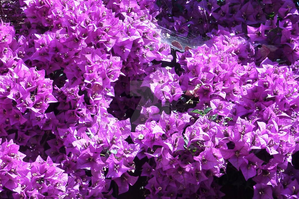 Purple Goodness by Jetta-Windstar