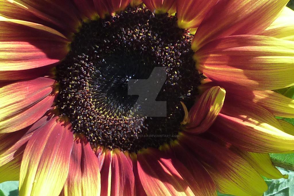 Flower #7 by Jetta-Windstar