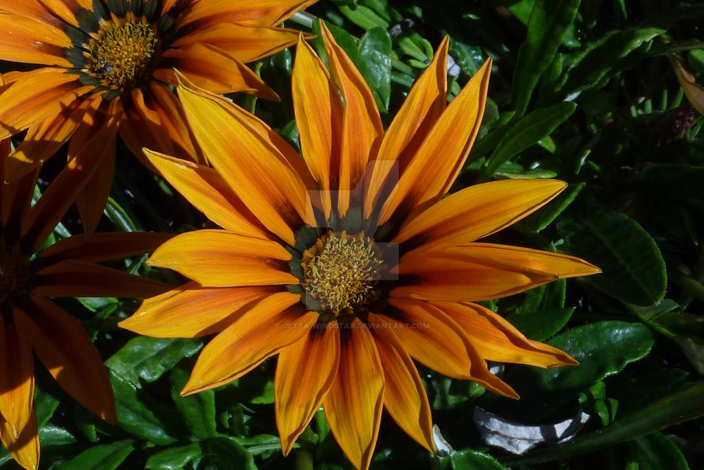 Flower #8 by Jetta-Windstar