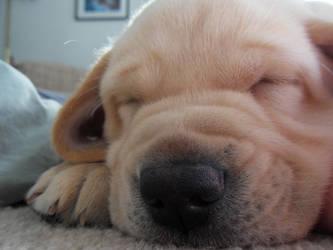 Sleeping Puppy 4