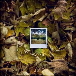 My Pola World_Chapter IV by SebastienTabuteaud