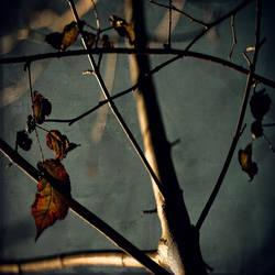 Between the Trees chapter III by SebastienTabuteaud