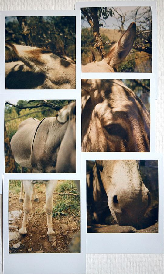Wild Horses by SebastienTabuteaud
