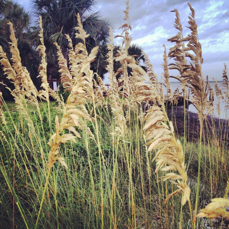 Beach Wheat by shelbyrenee