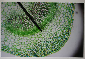 Green Microscope Slide