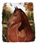 Calipso portrait
