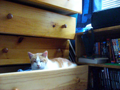 My Kitty in the Drawer