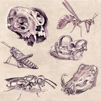 Practice Sketches by kvernikovskiy
