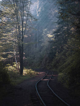 Tracks in the forest