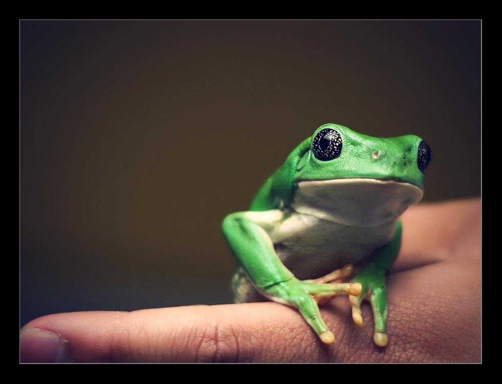 Amphibian. by pleautaud