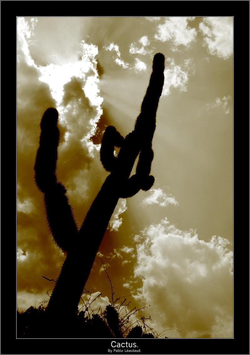 Cactus. by pleautaud
