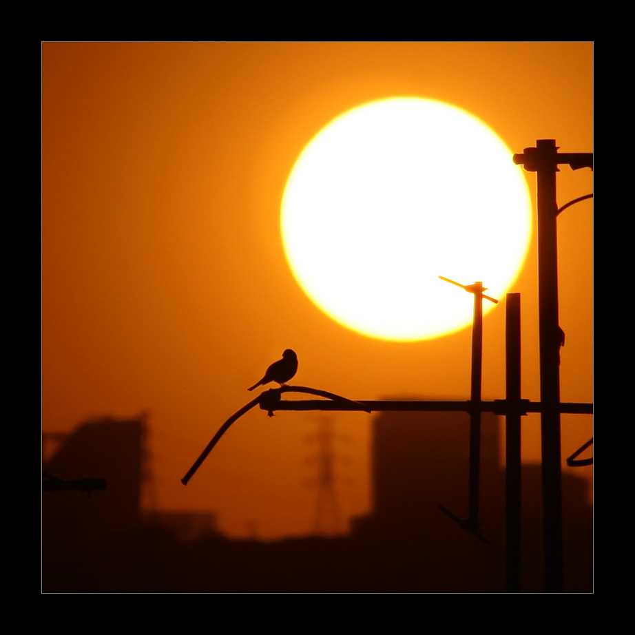 Crepuscular bird. by pleautaud