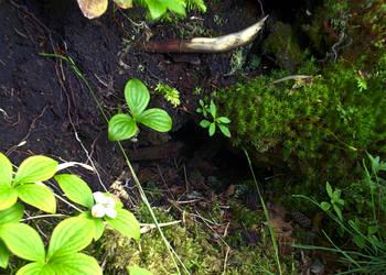 The Rabbit Hole by Joran-Antilles