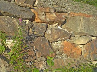 Plants and Rocks by Joran-Antilles