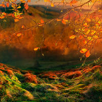 Autumn Lights by Lhianne