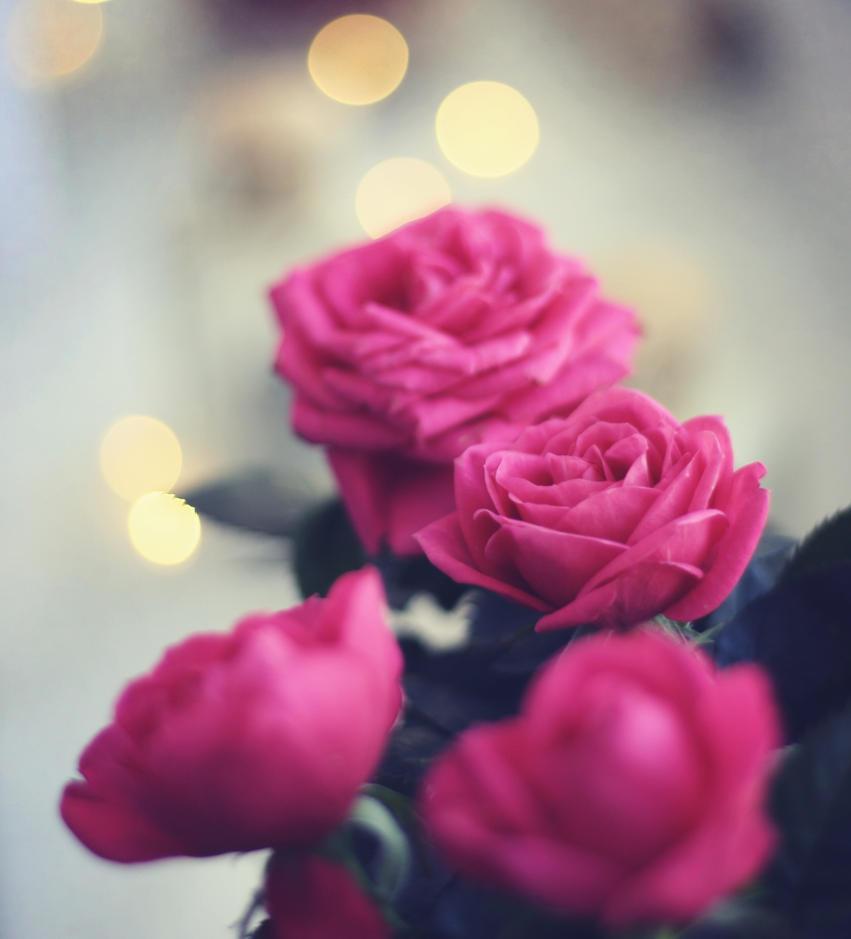 valentine roses. by mrzn89