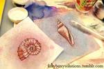 Seashell and Ammonite Drawings