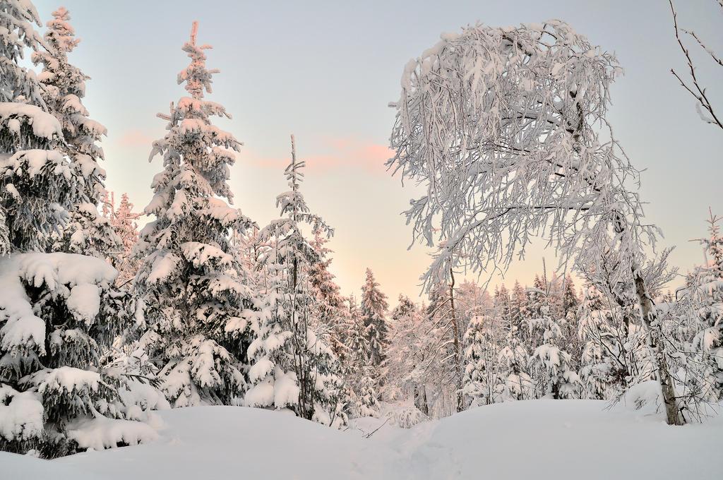 Winter Wonderland by skyblue-13