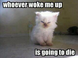 Angry Kitten by ZeldinaPrincess
