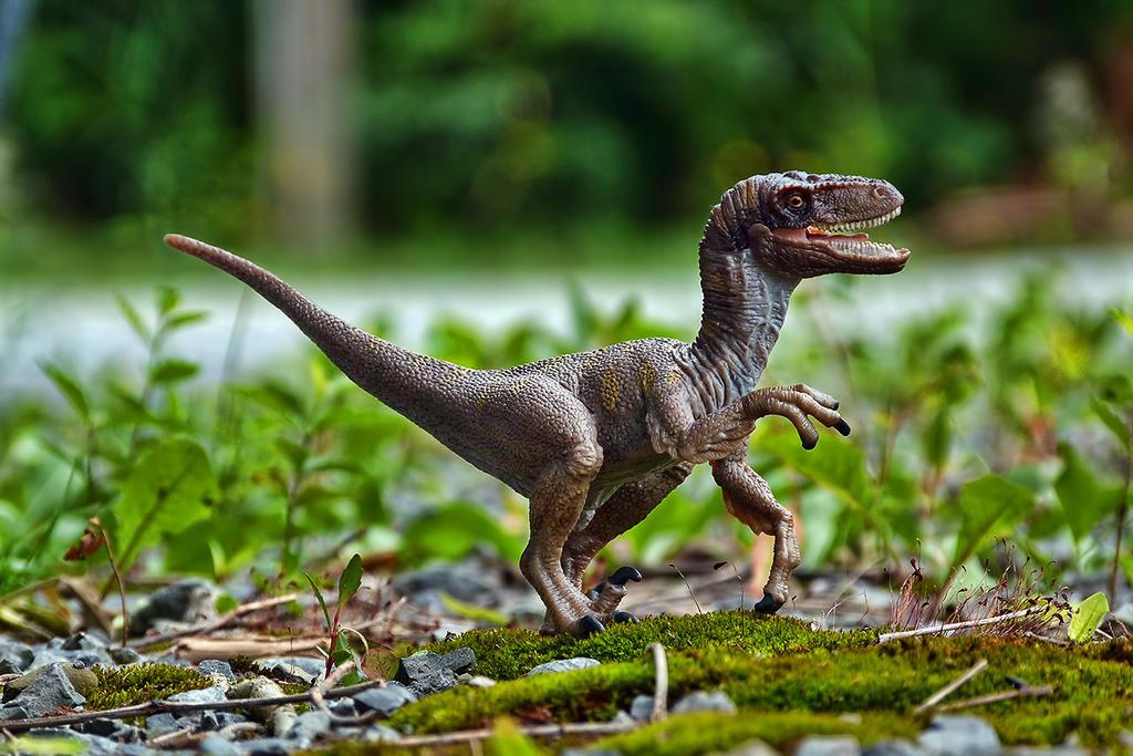 Velociraptor by FordGT