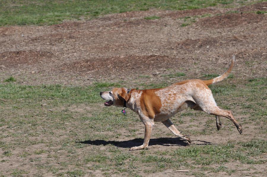 dog_running_by_canuckzd-d4vhzpu.jpg