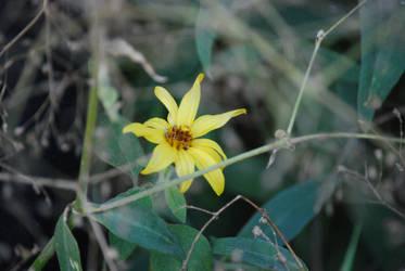 One Last Flower