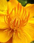 Yellow by sambudd