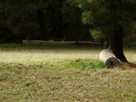 A Peaceful Scene by kitszl17