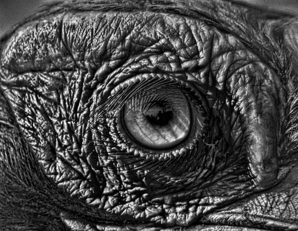 Black eye by bulgphoto