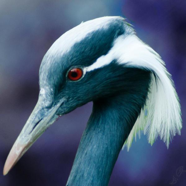 The bird 3 by bulgphoto
