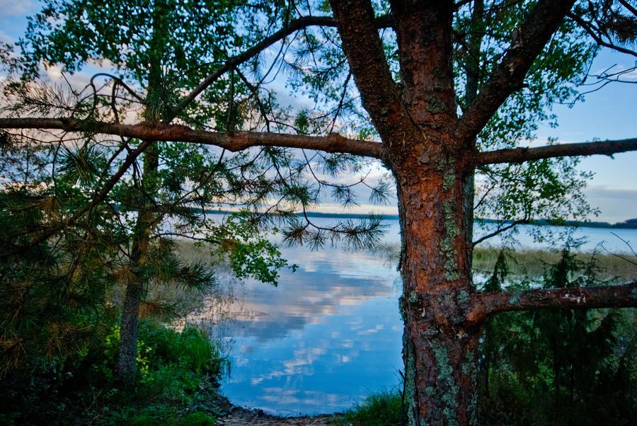Wood Sky by bulgphoto