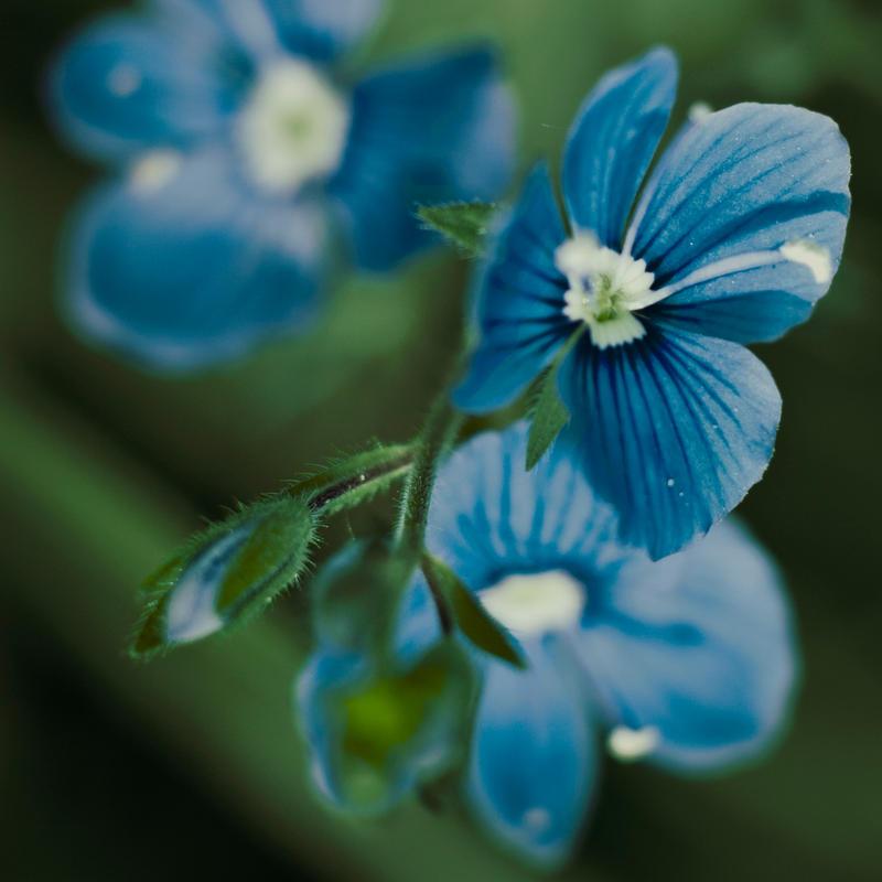 BlueF2 by bulgphoto