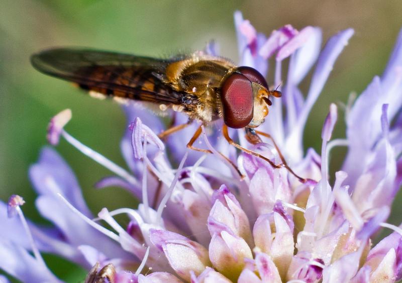 FlowerM by bulgphoto