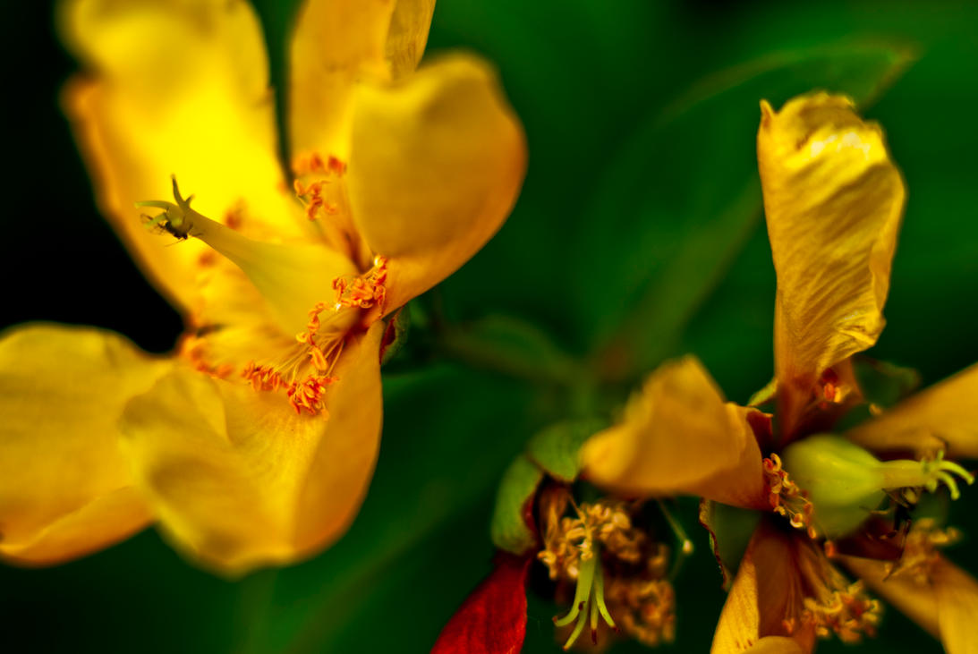 Yellow de Jaunies by bulgphoto