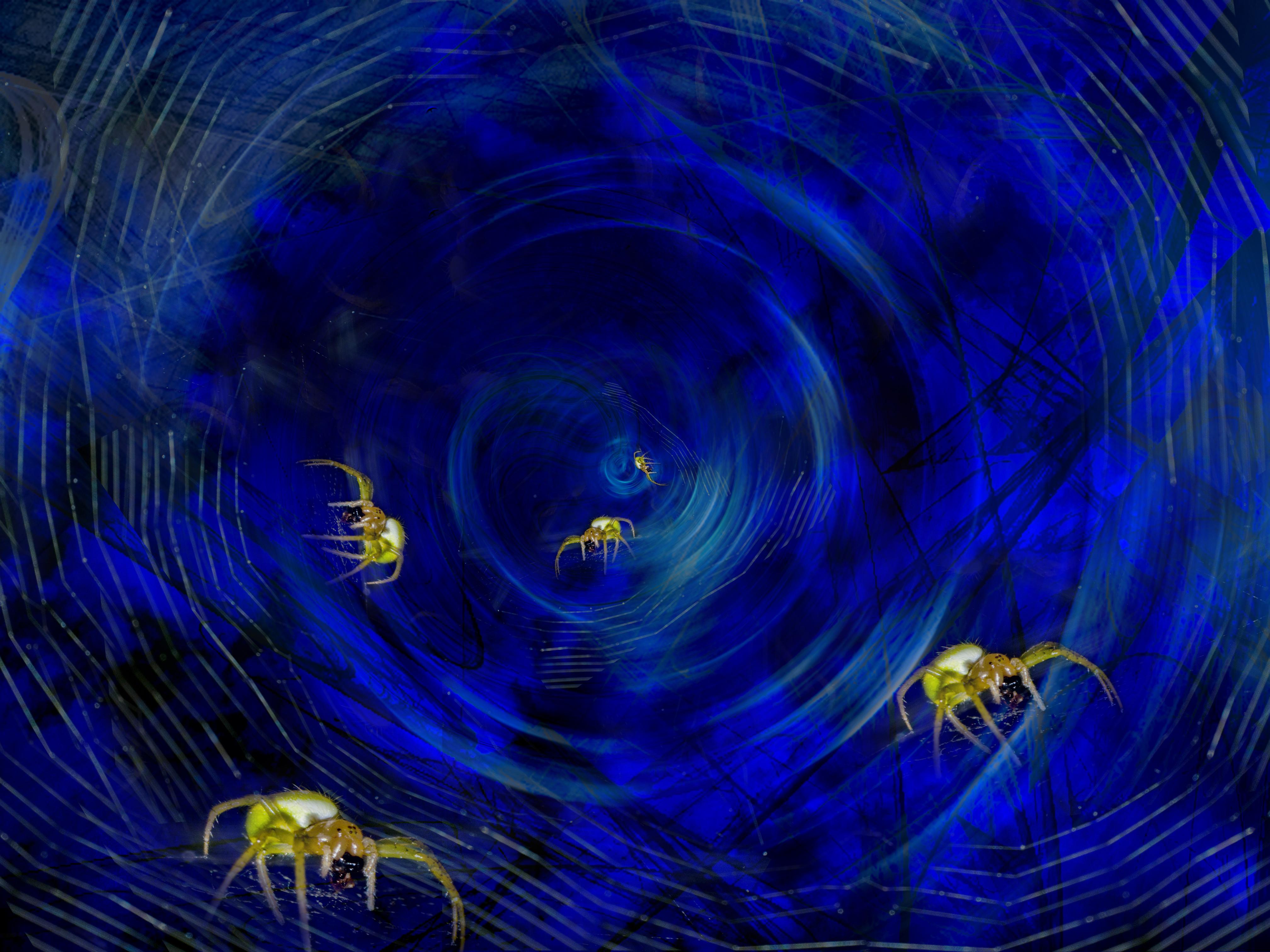 Aracnomania in Blue by bulgphoto