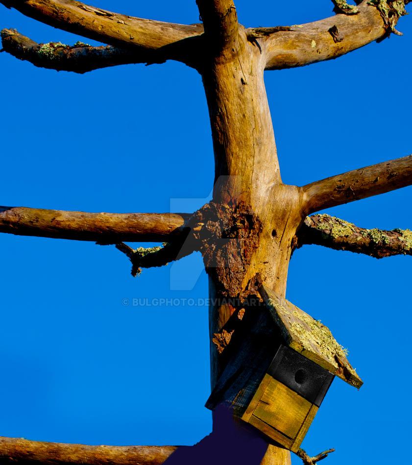 Bird House Orange Blue by bulgphoto