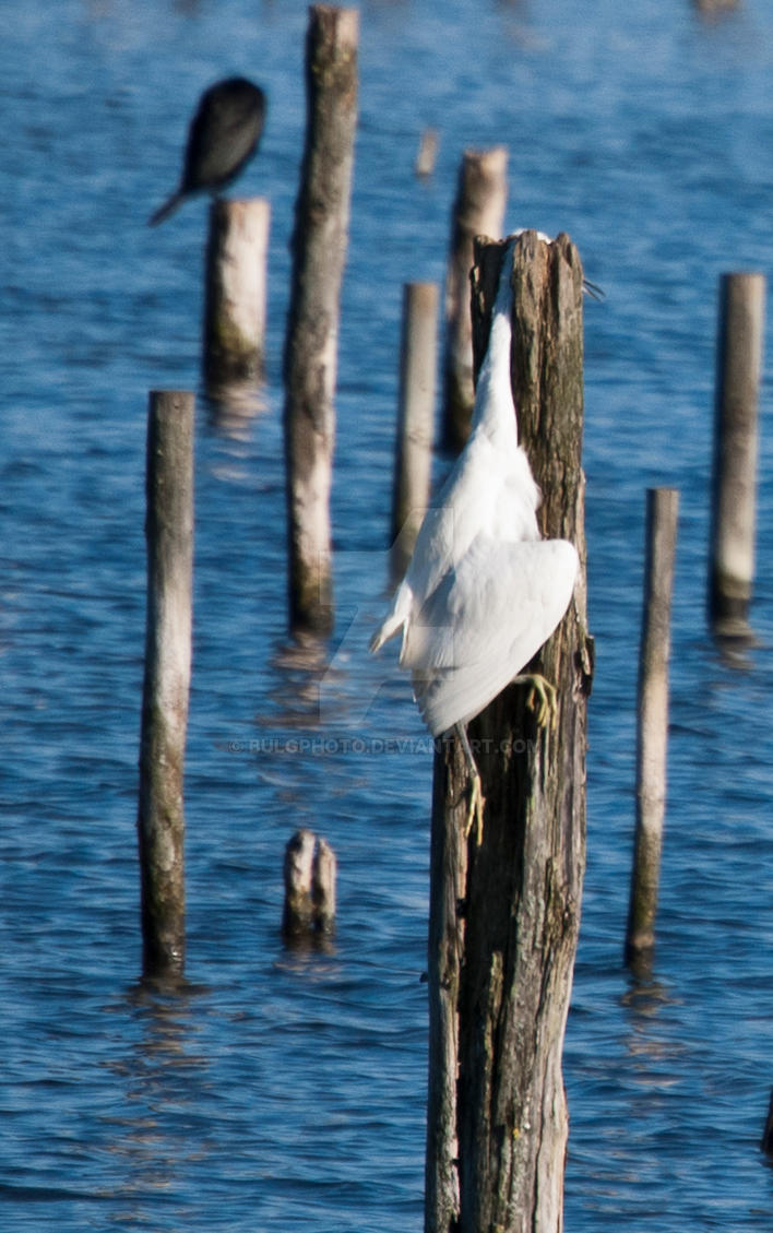 Bird death by bulgphoto