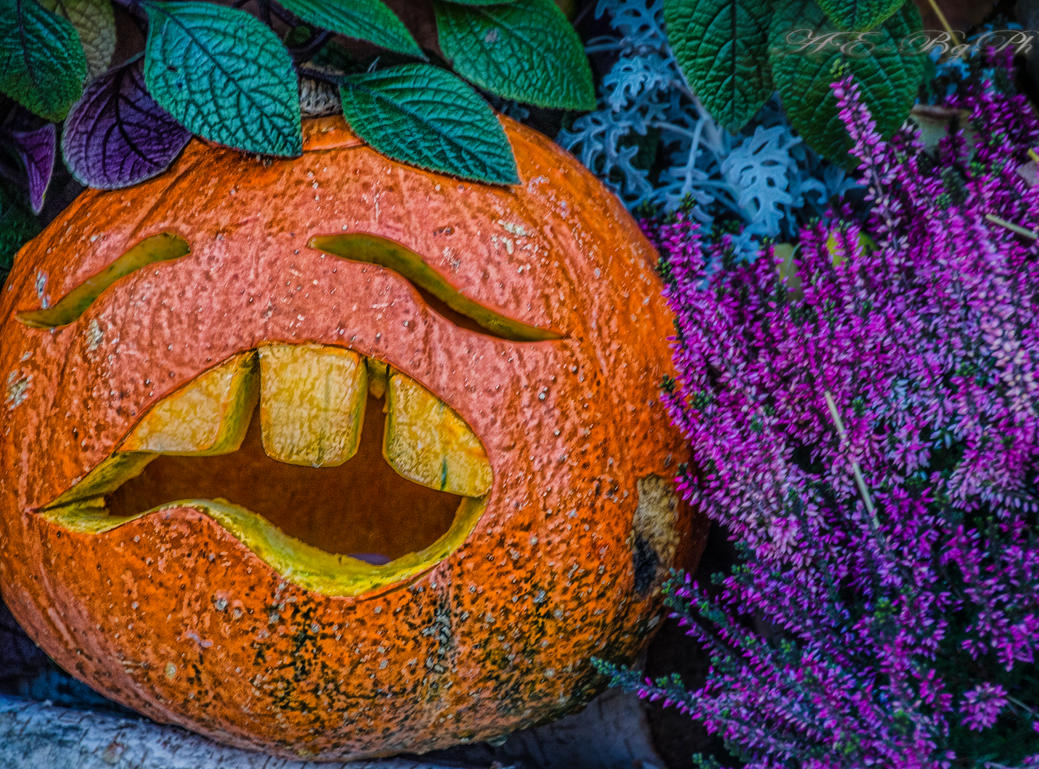 Halloween Pumpkin 2012 by bulgphoto