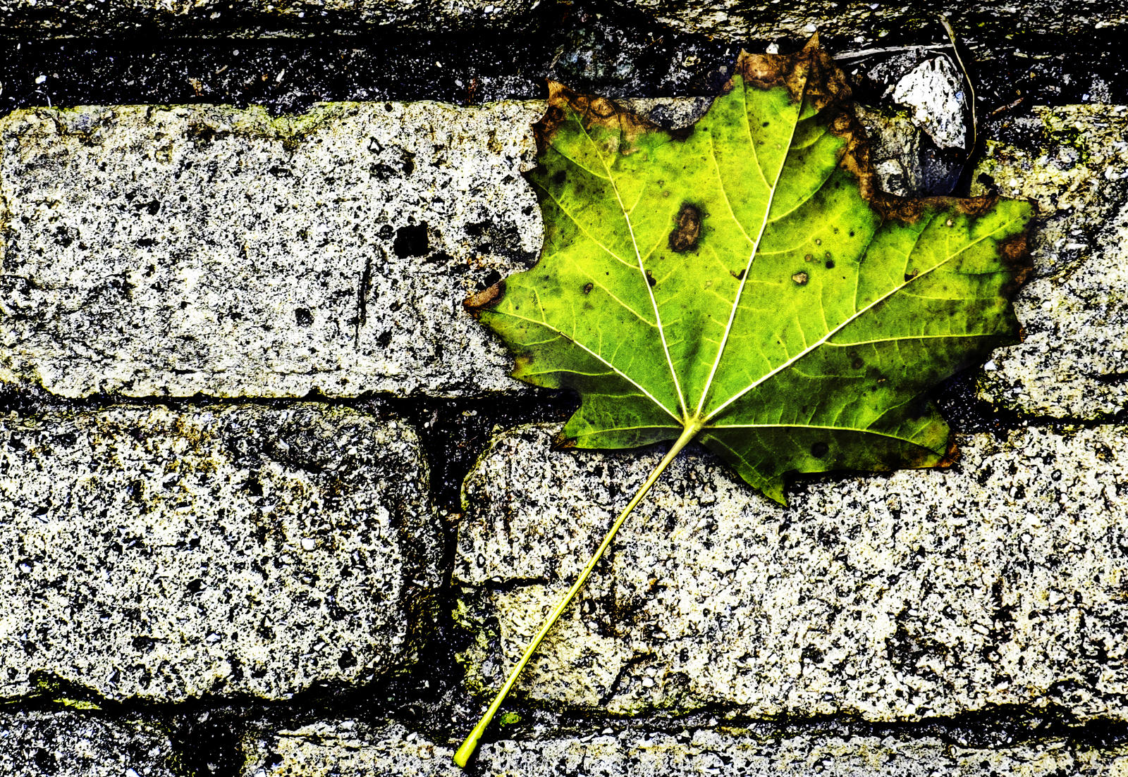Leaf by bulgphoto