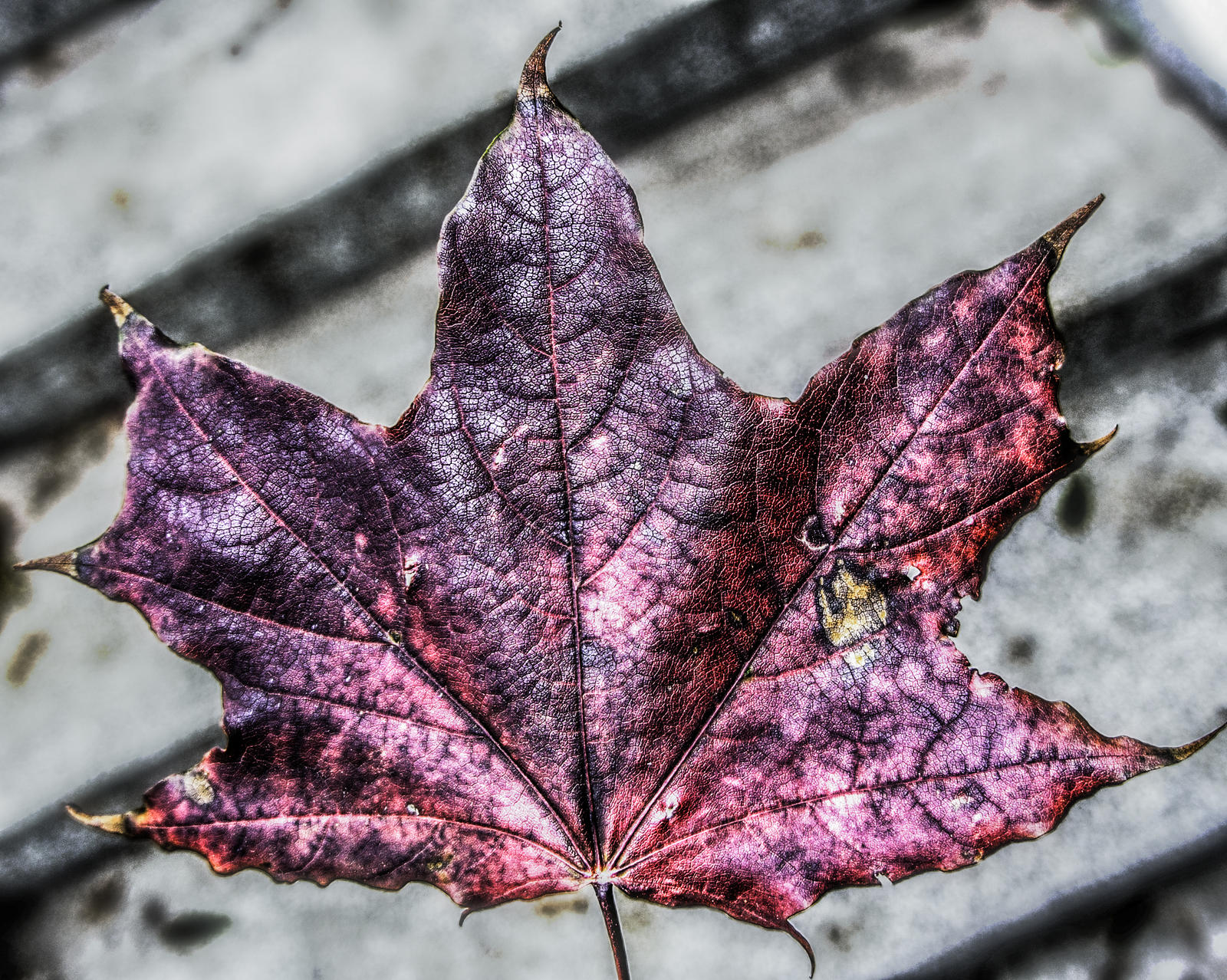 Leaf 2 by bulgphoto