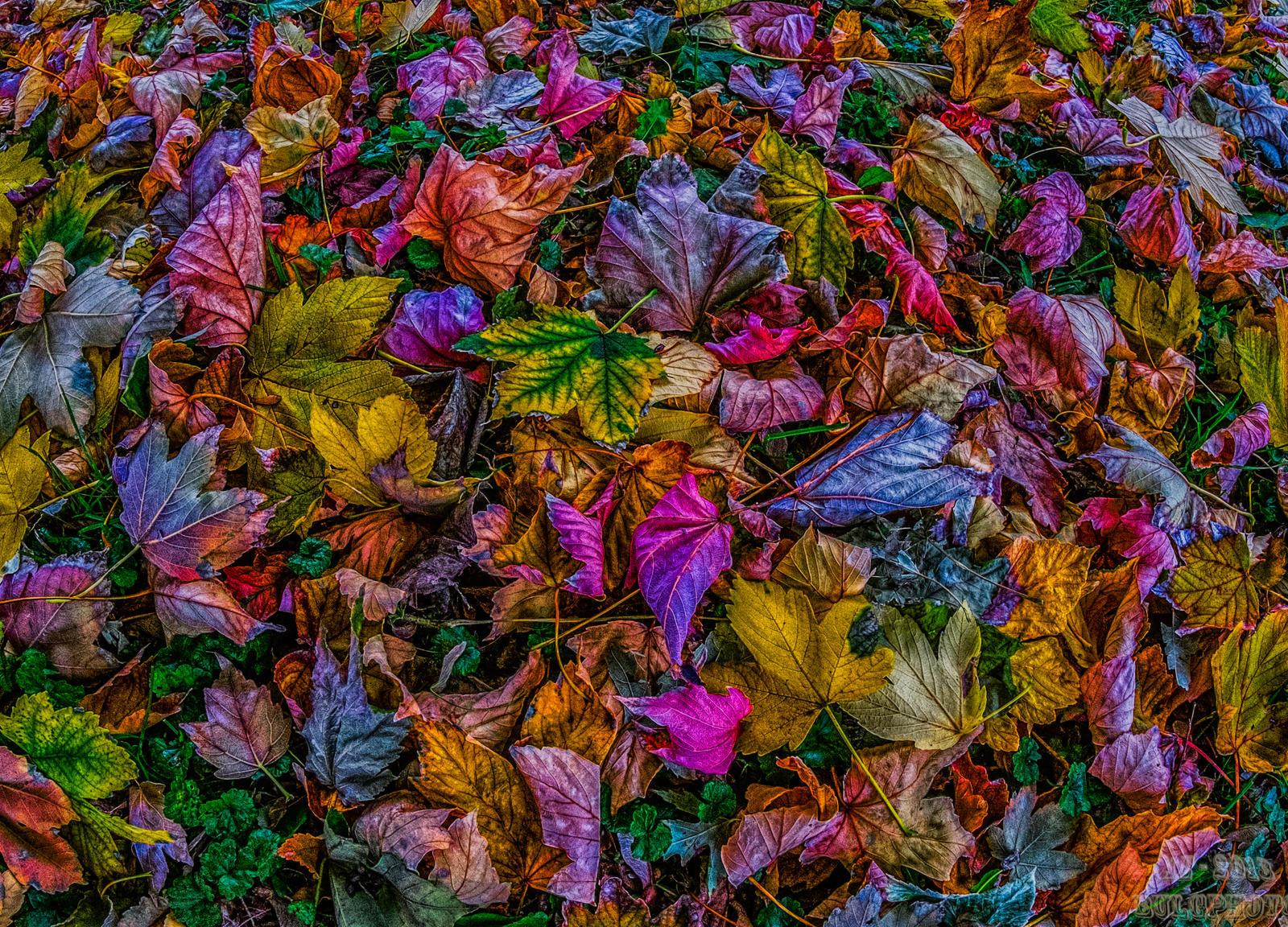Leafs 4 by bulgphoto